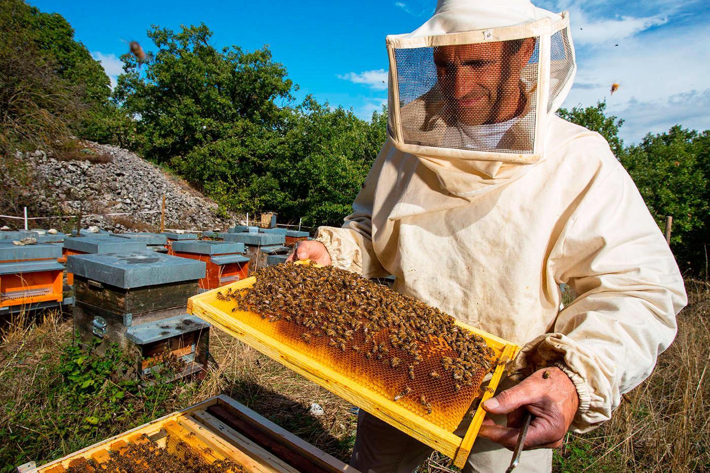 Пчеловодство Краснодар