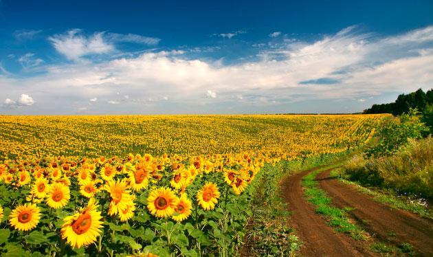 Пчеловодство в Ростовской области